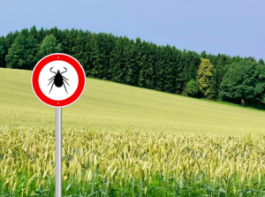 Dealing with Lyme Disease