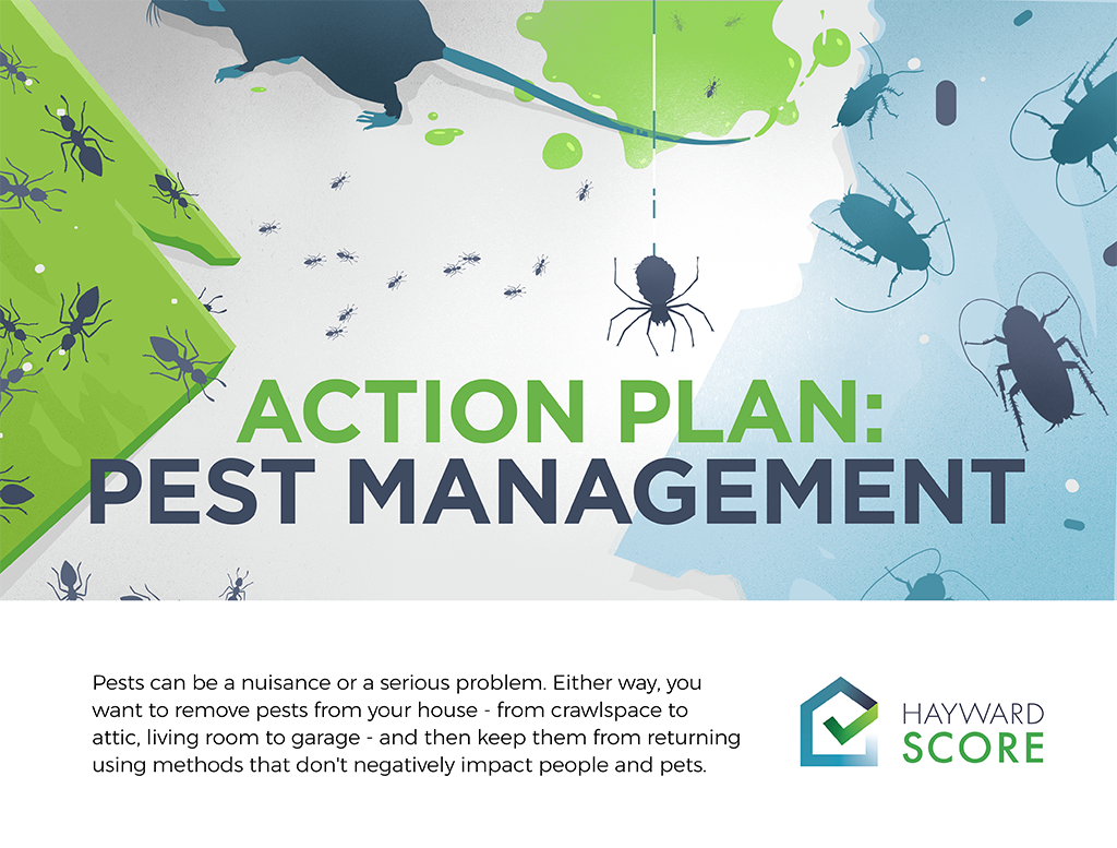 Action Plan: Pest Management
