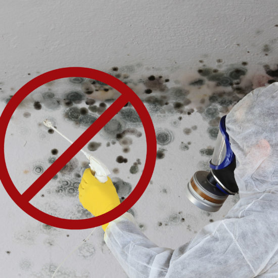 Ask an Expert: Remediating Mold