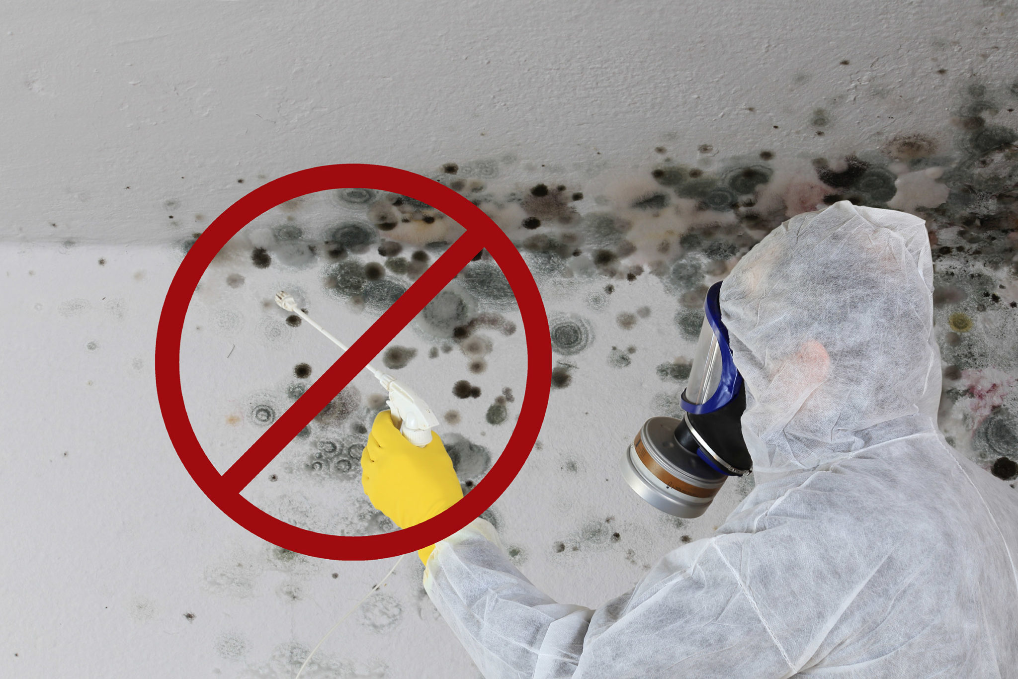 Ask an Expert: DIY or Professional Mold Removal?