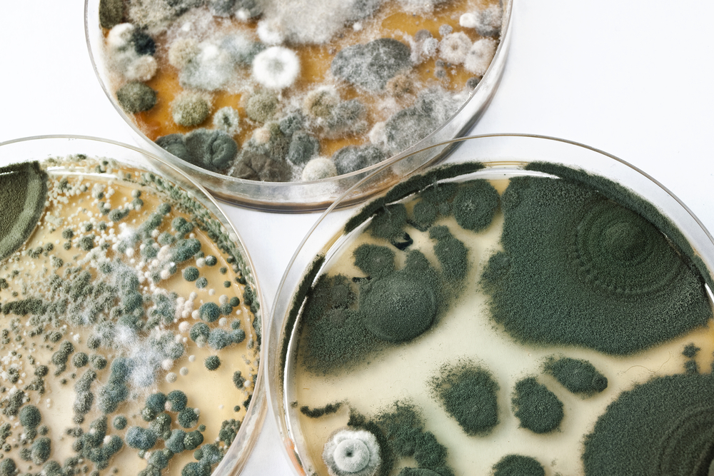 The Problem with Petri Dishes (for Mold Testing)