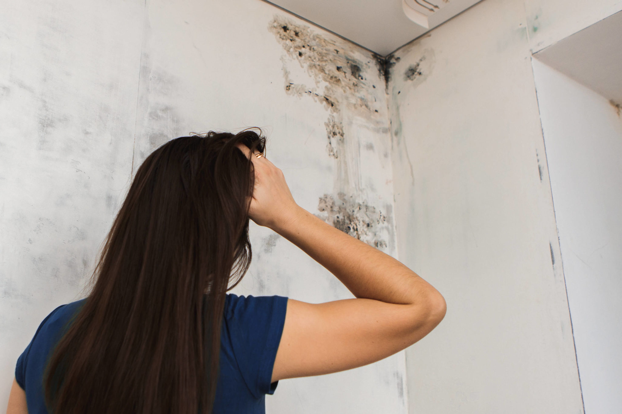 Toxic Black Mold: The Truths (and Myths)